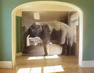 elephant in living room