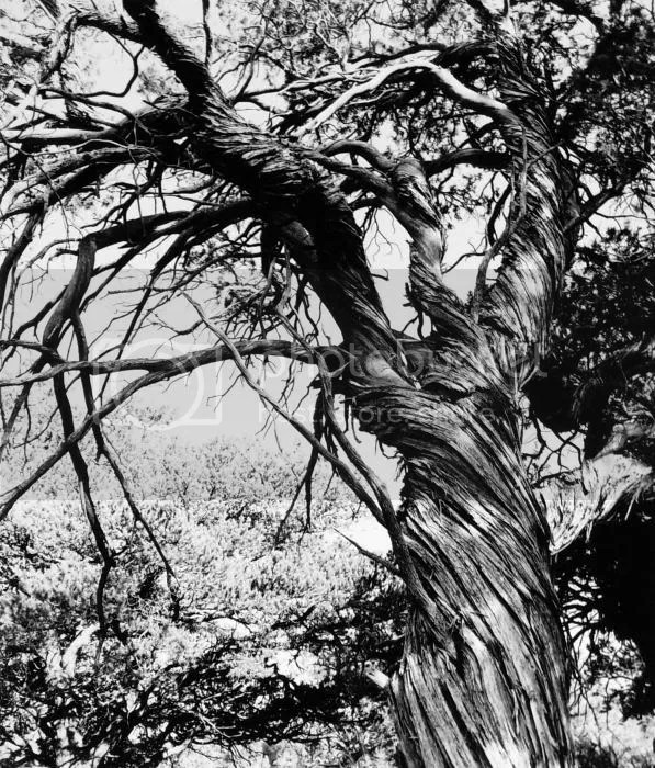 twisted tree photo twisted-beauty-allan-mcconnell.jpg