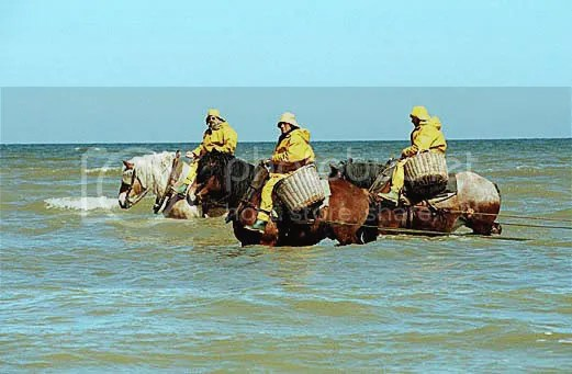 Shrimpers on horseback