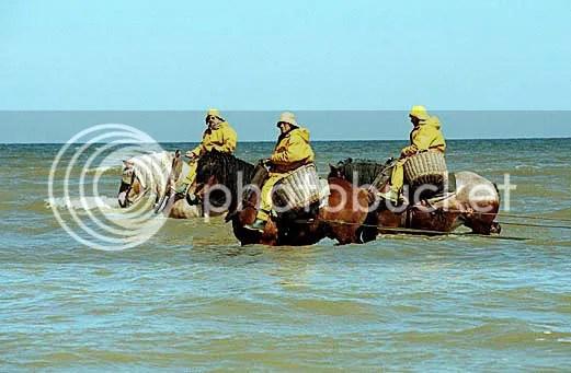 Shrimpers on horseback