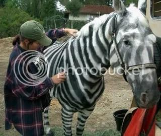 DIY zebra