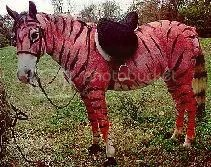 Tiger horse?