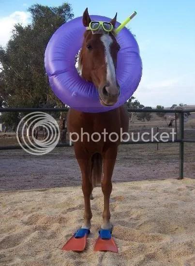 Sea horse (groan!)