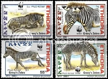 Zebra - Ethiopia