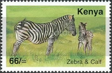 Zebra - Kenya