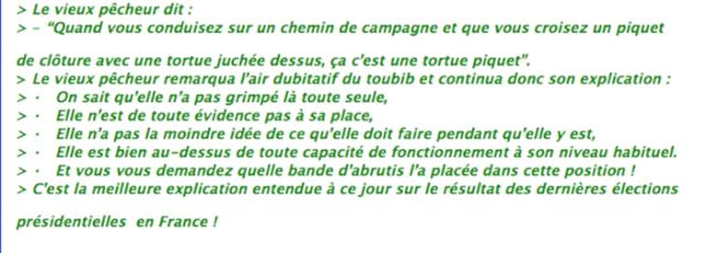 tortue piquet2