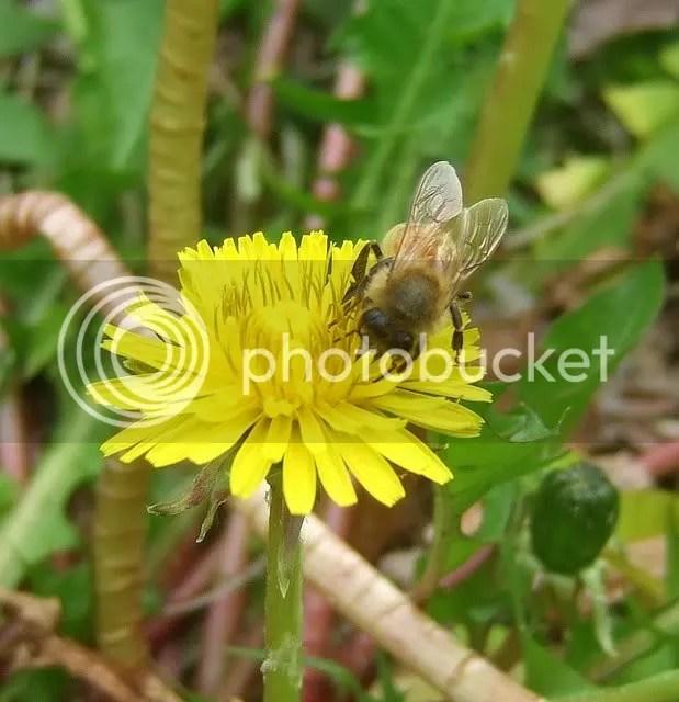 wings wasp dandelion st l 230409