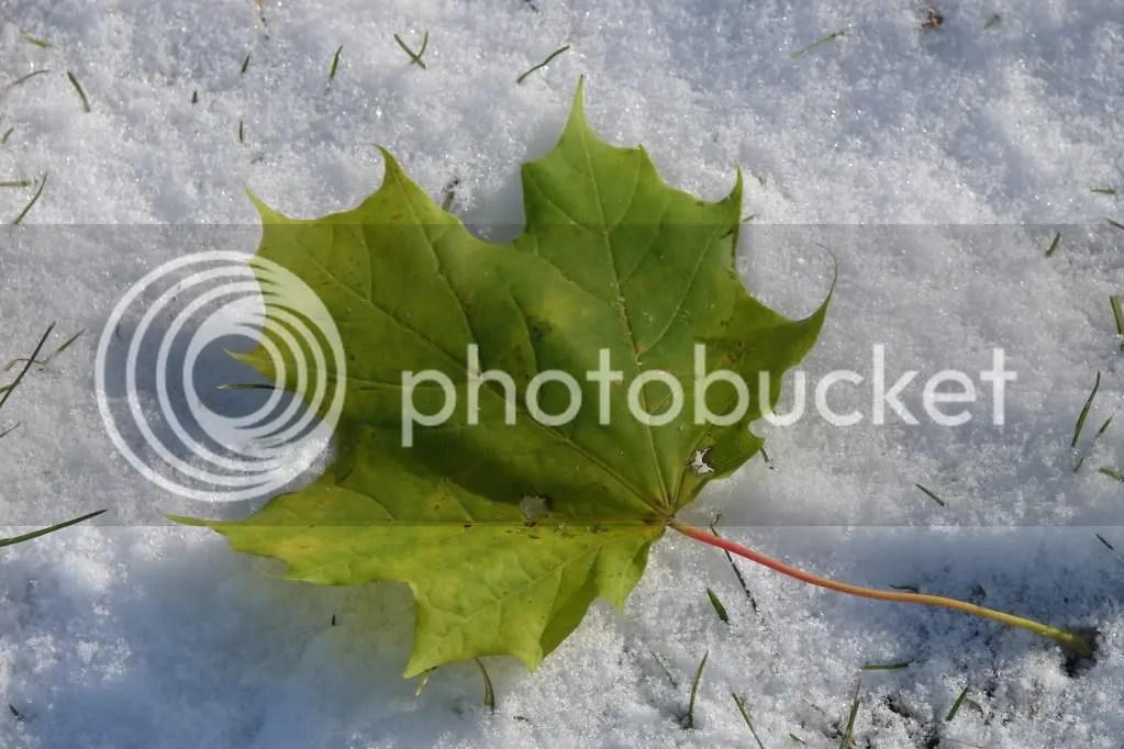 Leaf on the Snow (2009-10)