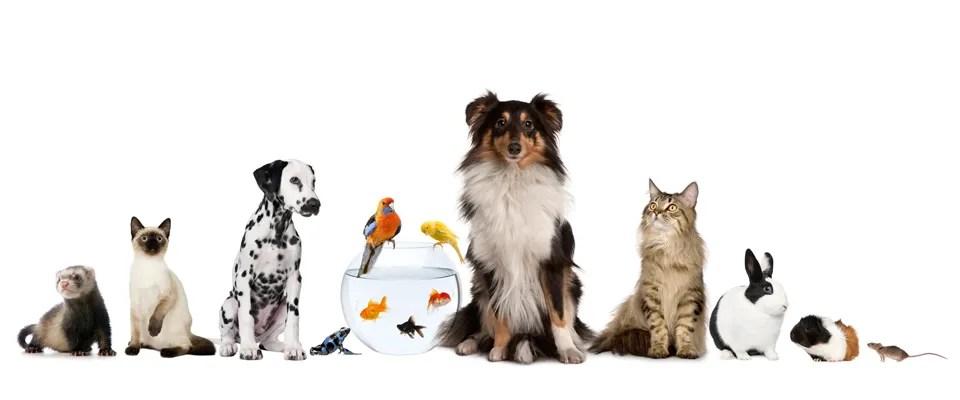 Afbeeldingsresultaat voor huisdier