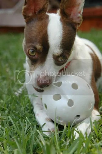 Loves to play wiffle ball