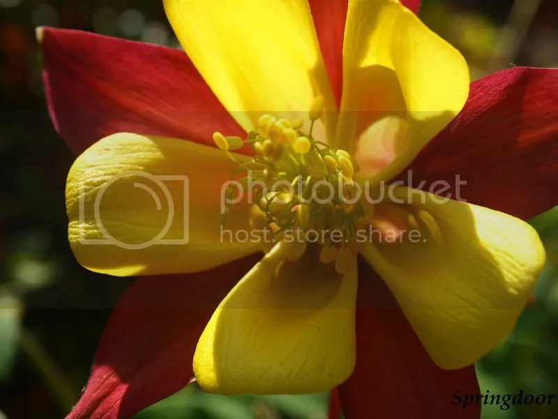 photo columbine2015_zpslerfqcgq.jpg