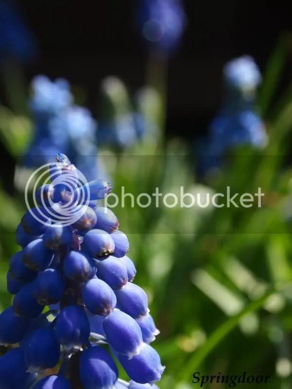 photo grapehyasenth_zps401bc6c4.jpg