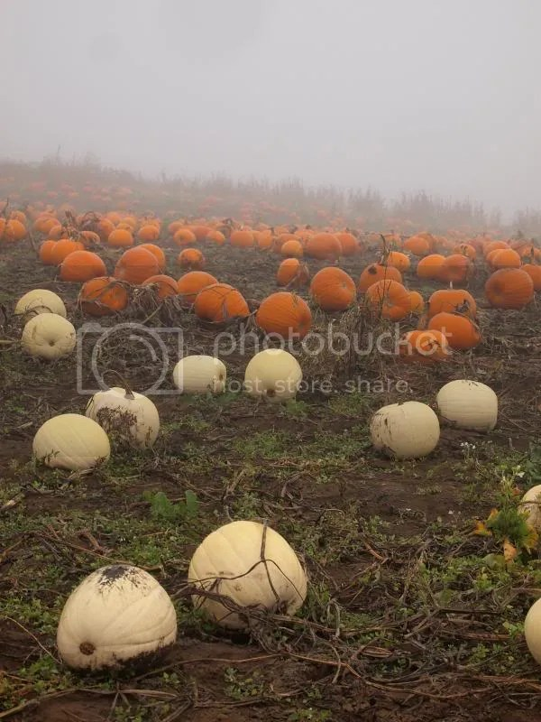photo pumpkinpatch2013_zps8fd005d7.jpg