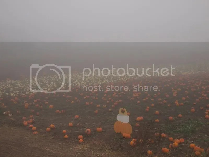 photo pumpkinpatch2_fall2013_zps6dc54ed1.jpg