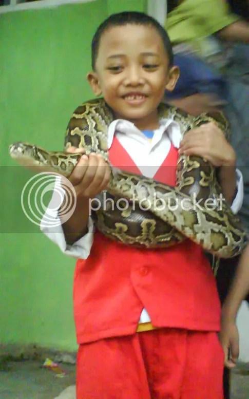 awas, ularnya ngamuk