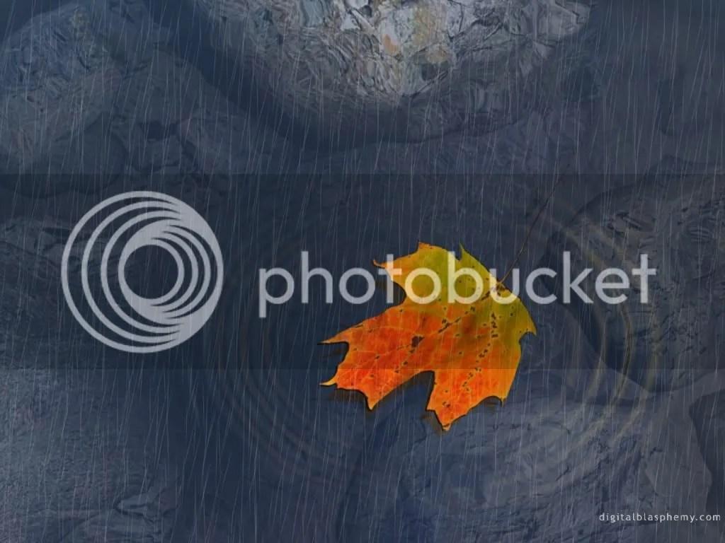 golden leaf photo: leaf w_81_1024x768.jpg