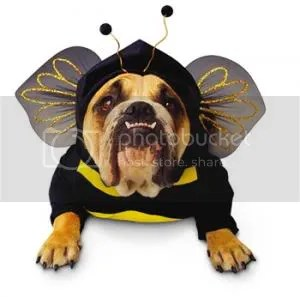 zelda bee dog costume Pictures, Images and Photos