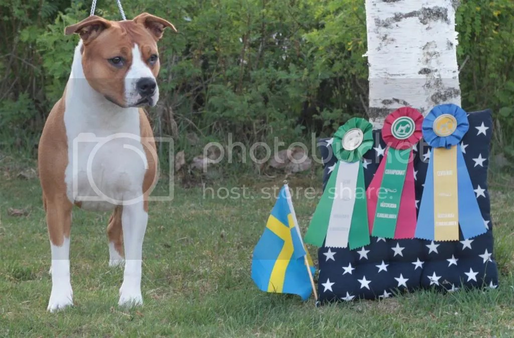 CHAMPION – NORD CH, SE UCH, DK CH, FI CH 14.05.2011