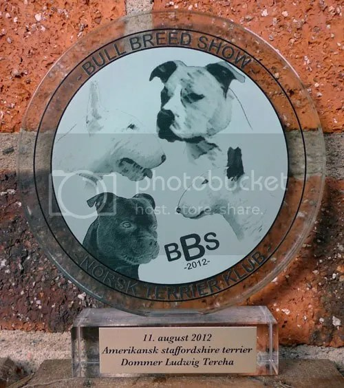 Grace on the logo of, Norwegian Terrier Club Bull Breed Show American Staffordshire Terrier
