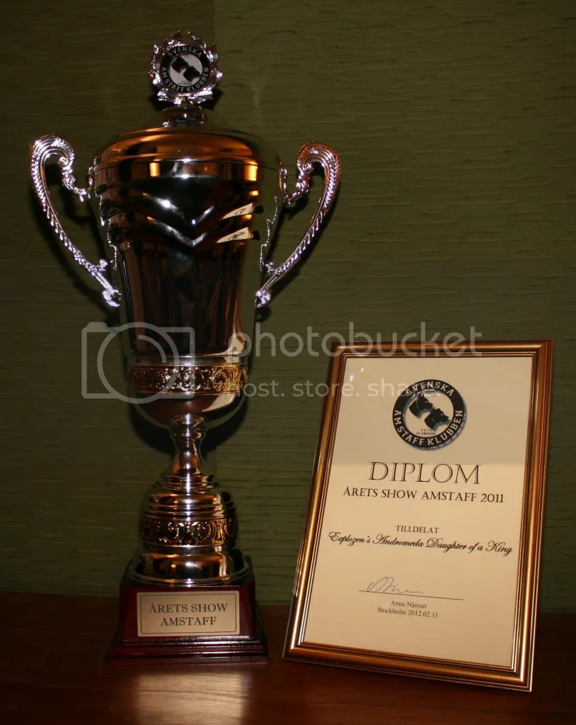 Top Amstaff #1  Top female #1  Sweden 2011