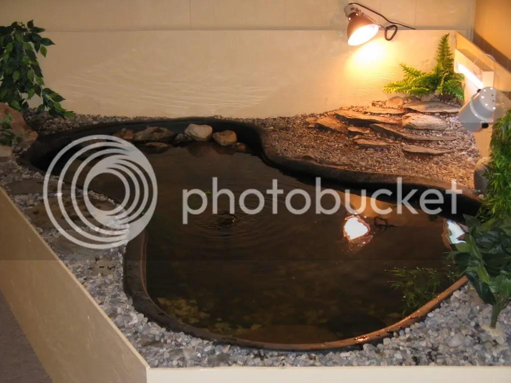 Winter Turtle Pond Hiss Forum