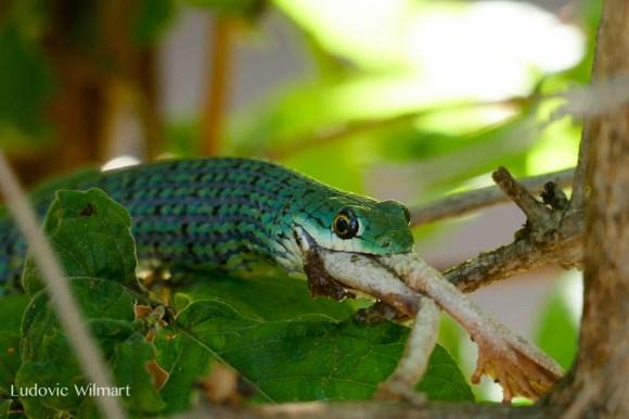 snakeludo4.182138.jpg