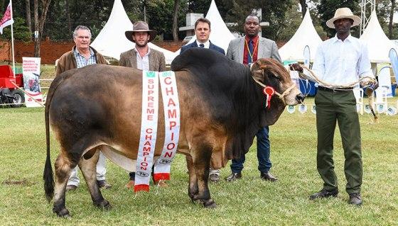 Best bulls in show