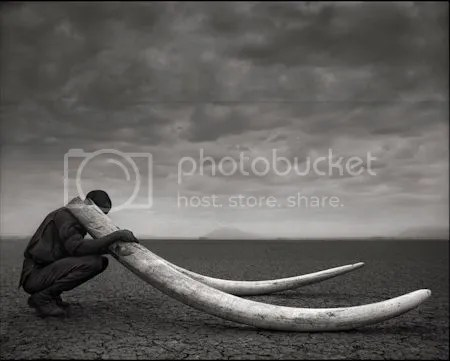 photo NickBrandtRangerWithTusksOfKilledElephantAmboseli2011ArchivalPigmentPrint.jpg