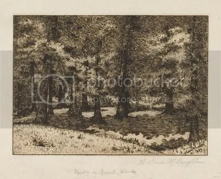 photo MaryLouiseMcLaughlinBeechesInBurnetWoods1883Etching.jpg