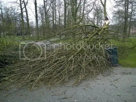 photo WP_20170223_001StormValkenbergBreda.jpg