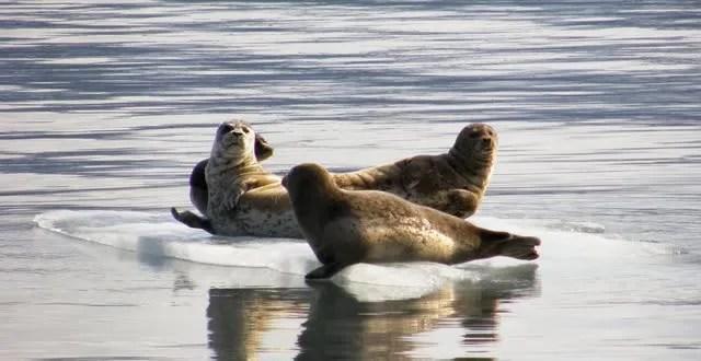 kenai fjord--copyright B. Barnett