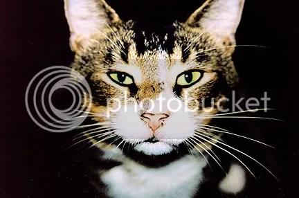 Meano Cat