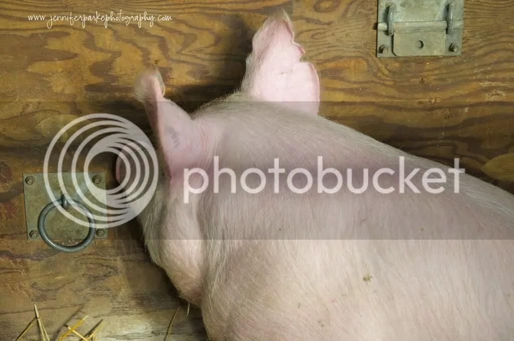 JPP,farmshow