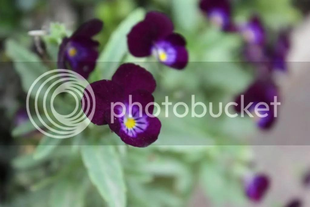 photo IMG_0421_zps68dcf70e.jpg