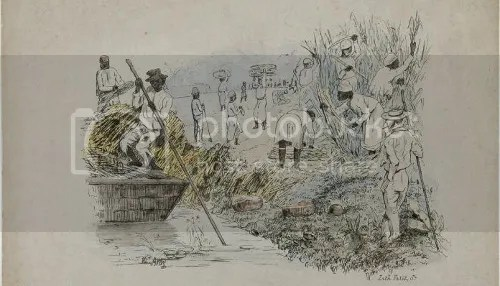 A 19th century lithograph by Theodore Bray showing a sugarcane plantation