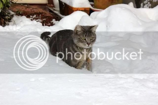 photo Sneeuwpret_08.jpg