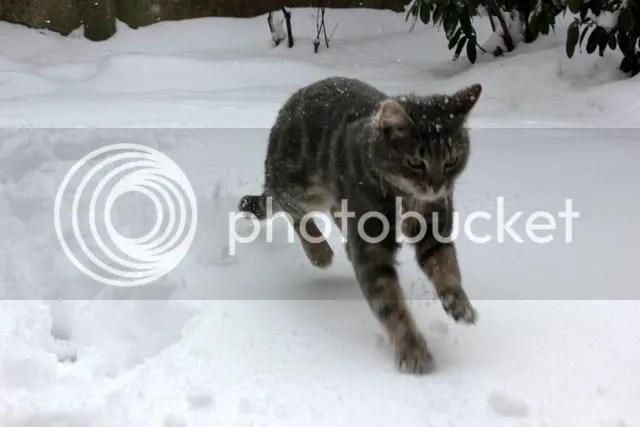 photo Sneeuwpret_12.jpg