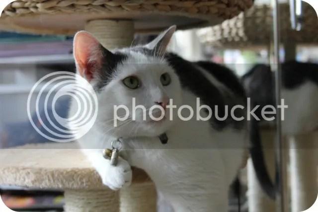Vorige Week - Stalkte ik mijn katten