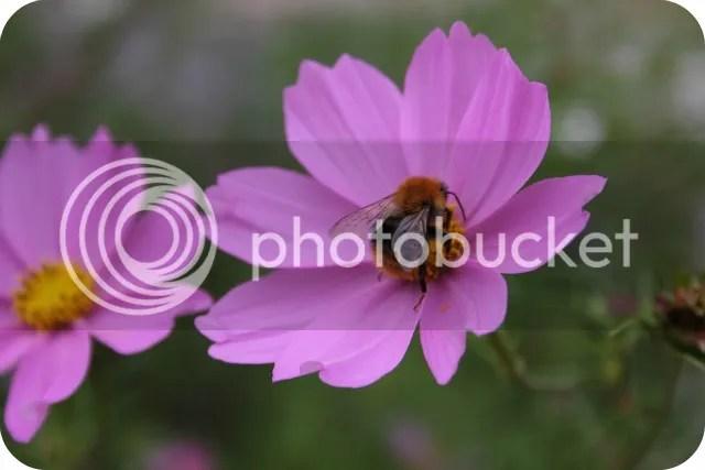 Vorige Week - Fauna & Flora bestuderen
