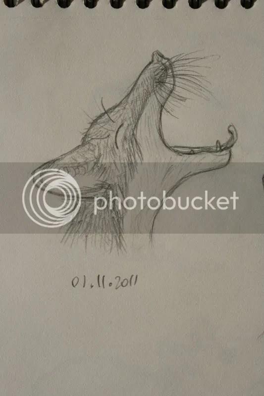 Sketchbook pt.11 - Geeuwende vos