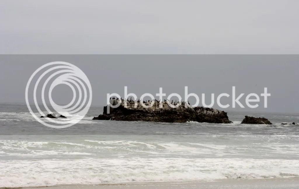 laguna beach marketing firms