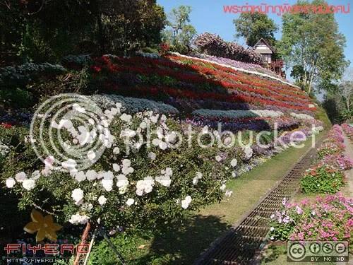 พระตำหนักภูพิงคราชนิเวศน์, เชียงราย, สวนดอกไม้, ต้นไม้, ดอกไม้