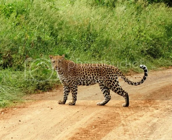 photo Leopard_zps329e079f.jpg