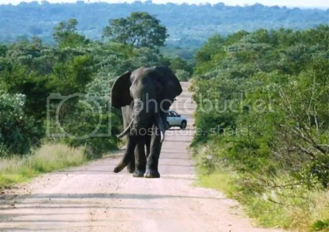 photo Part3_Elephant_chasing_us_zpscdb9453a.jpg