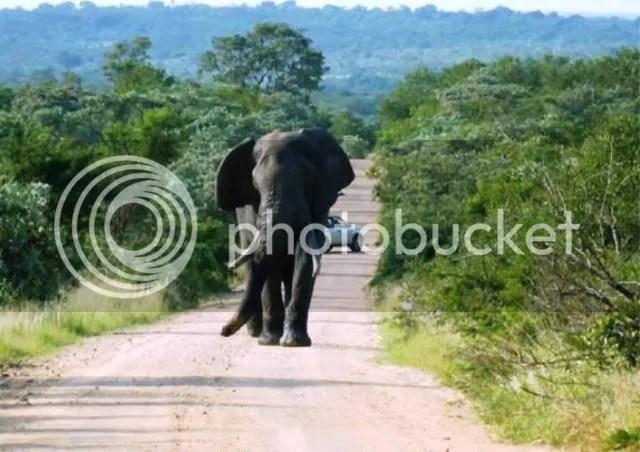 photo Part3_Elephant_chasing_us_zpscdb9453a.jpg