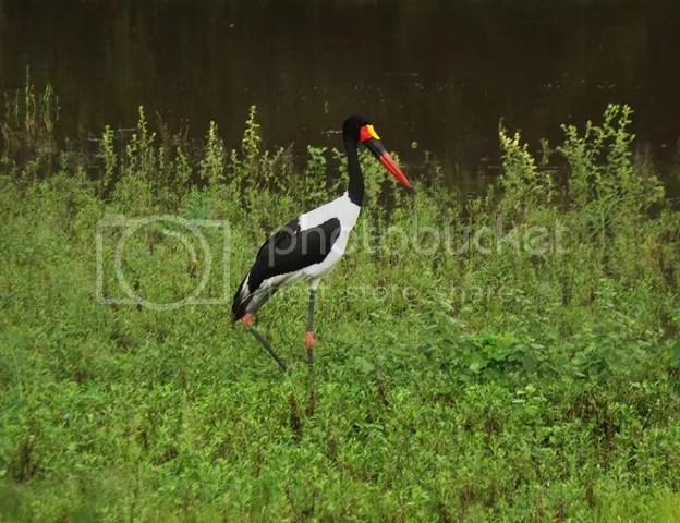 photo Part5_Saddle_billedstork_zpsf5c18332.jpg