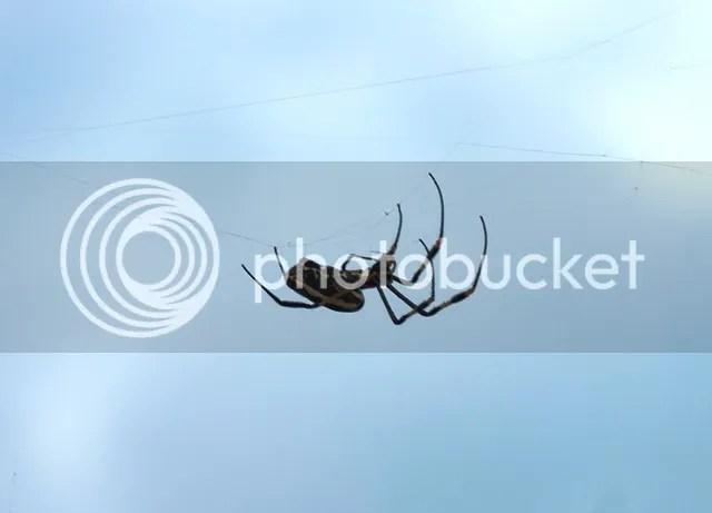 photo Spider_zps6fb7cc5d.jpg
