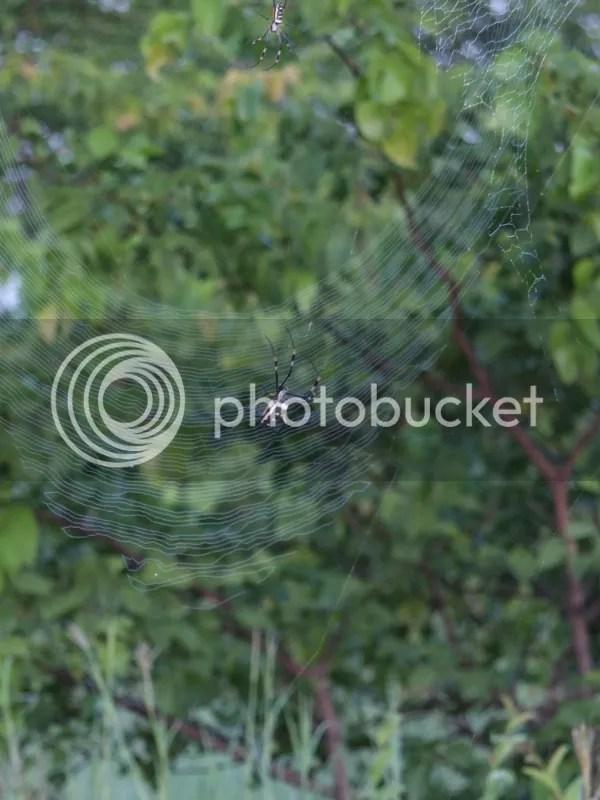 photo c5a5c687-f881-4eb4-8a34-1f10adb2529e_zps26469369.jpg