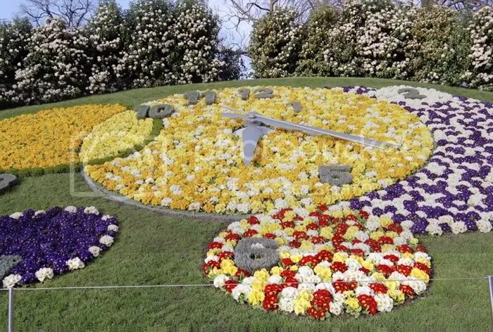 FLOWER CLOCK  PICTURES 6