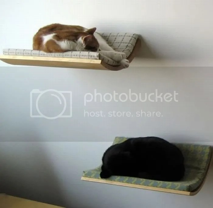 funny bed pictures15